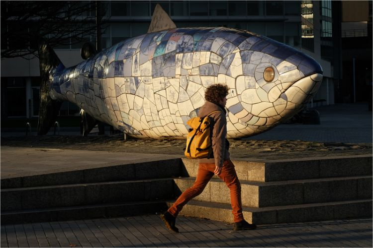 Big Fish Belfast