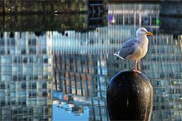 Bird in the Dock