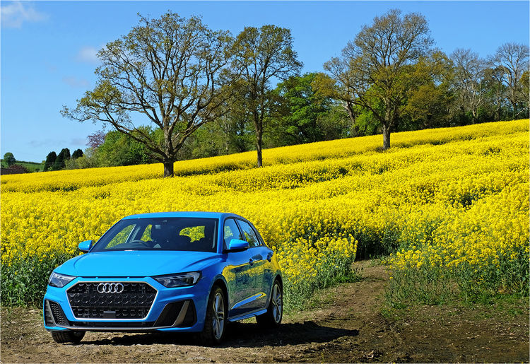Blue Audi A1 in a yellow field