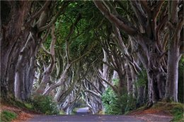 Dark Hedges Co Antrim