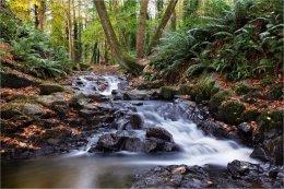 Drumlack River Markethill Armagh