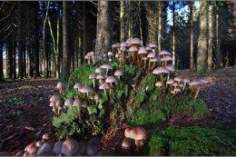 Fungi Co Armagh