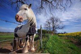 Horse Co Armagh