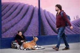 Lavender Field Street life