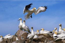 Saltee Islands Co Wexford