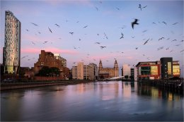Seagull invasion at Prince's Dock Liverpool