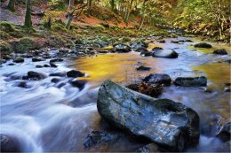 Shimna River Tollymore in Autumn colour
