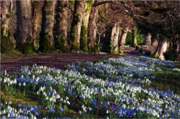 Spring at The Argory Co Armagh