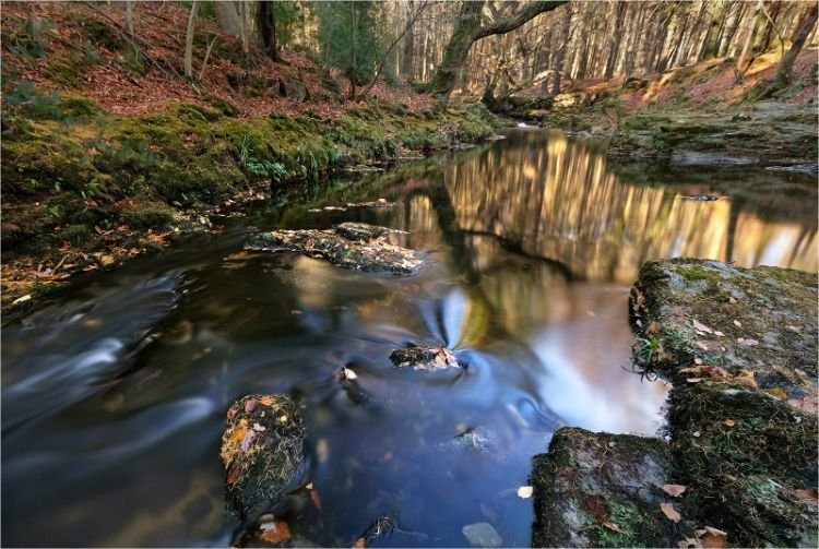 Tollymore autumn reflections