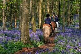 Trecking through the Bluebells