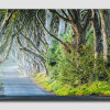 The-Dark-Hedges-----Pano-7
