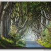 The-Dark-Hedges---Light-&-Trees------W5D33872