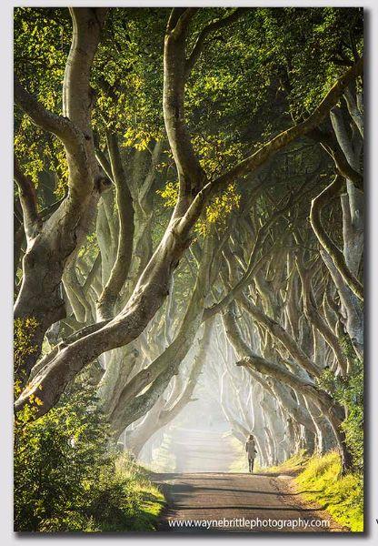 Walking-The-Dark-Hedges-Road-v2-----W5D33923