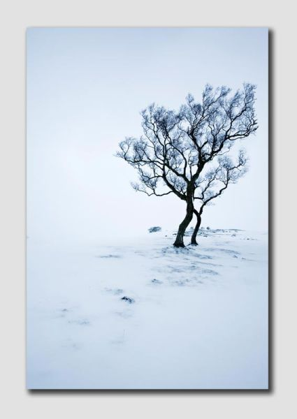 Alone in the snow -  Northumberland - NS8109