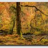 Autumn-Light---Pan-3-5dsr
