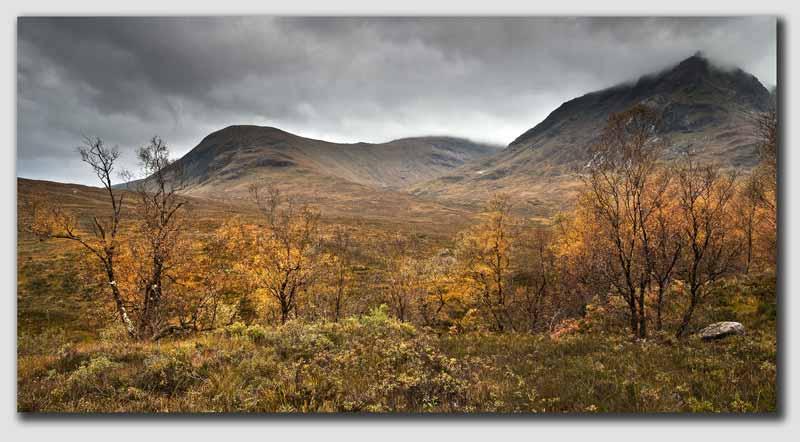 Rannoch Moor - Autumn Trees - SCS1618