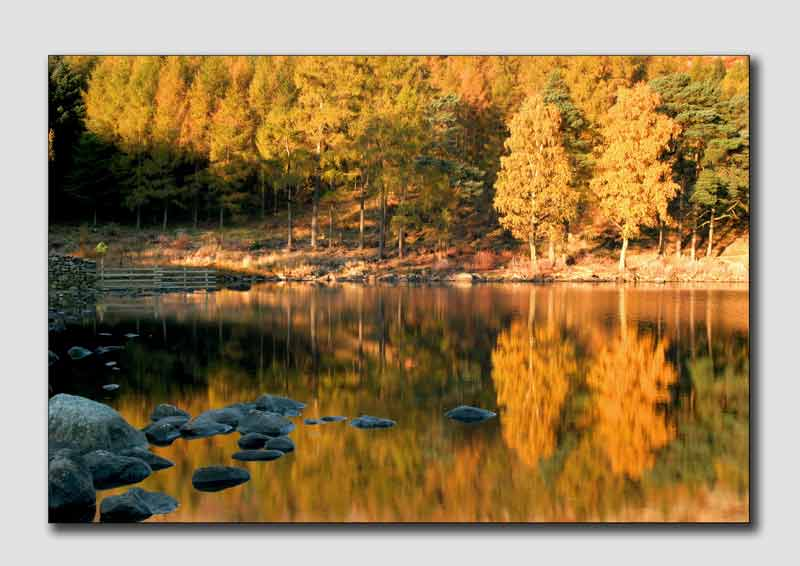 Autumn Trees on Blea Tarn  -  LS012