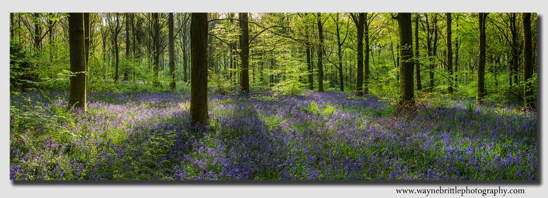 Bluebells-Woodlnd-Floor-Pan3