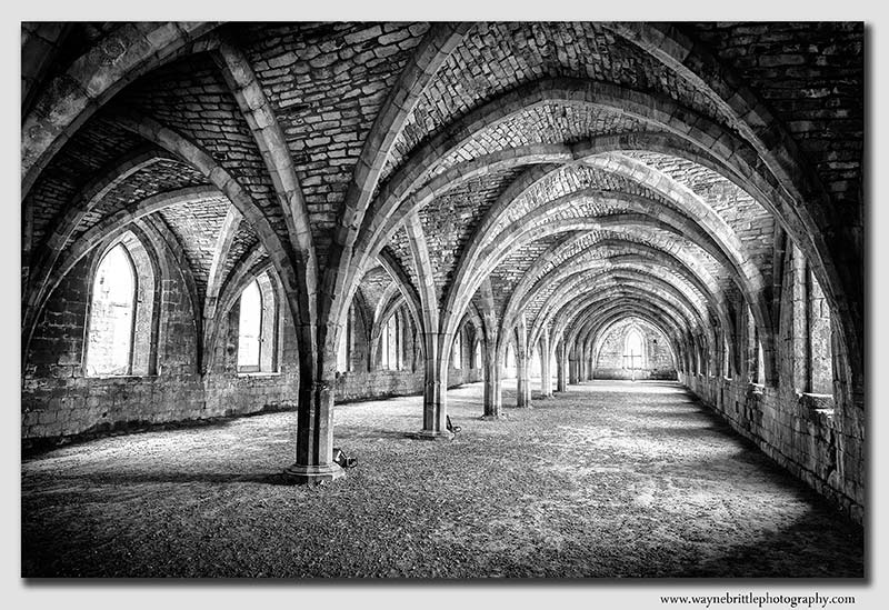 Cellerium in B&W - W5D3950n