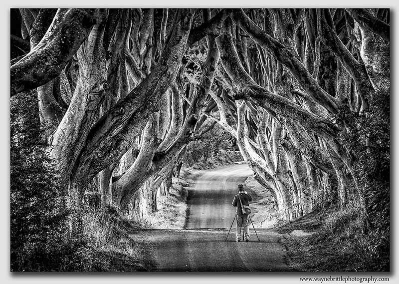 Dark Hedges--3n--B&W--W5D33762