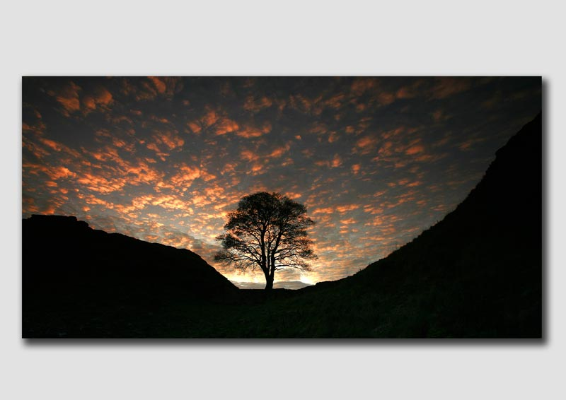 Sycamore Gap (wide view) - NS103