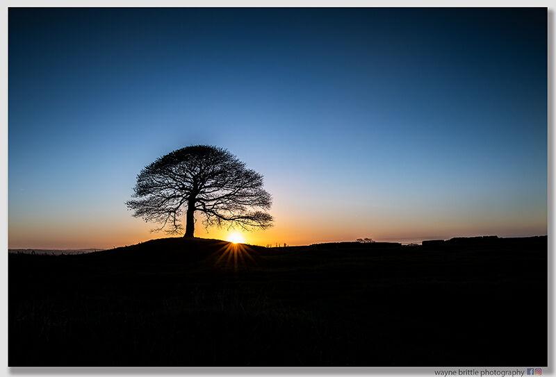 The Tree First Light - W5D45673