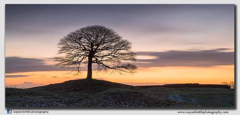 'The Tree' Pre-Dawn Light