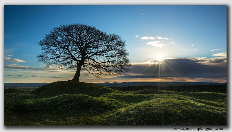 Grindon Tree and the sunlight