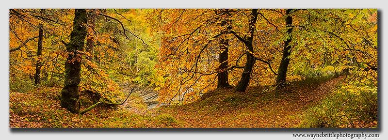 Scottish Highland - Autumn Panorama
