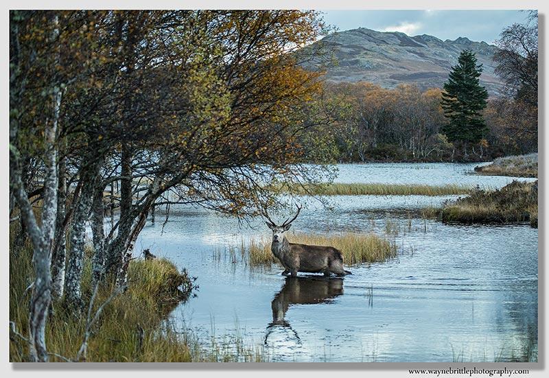 Crossing the Loch