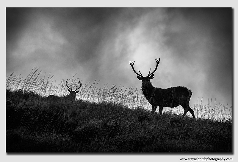 Highland Staggs & Moody Skies - B&W  - W5D39551