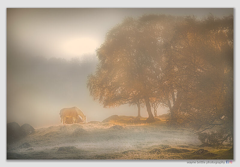 Horse in the mist and the golden light of an Autumn Morning - n1 W5D41647