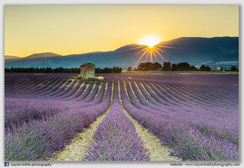Lavender Barn Sunset - 5DSR4796