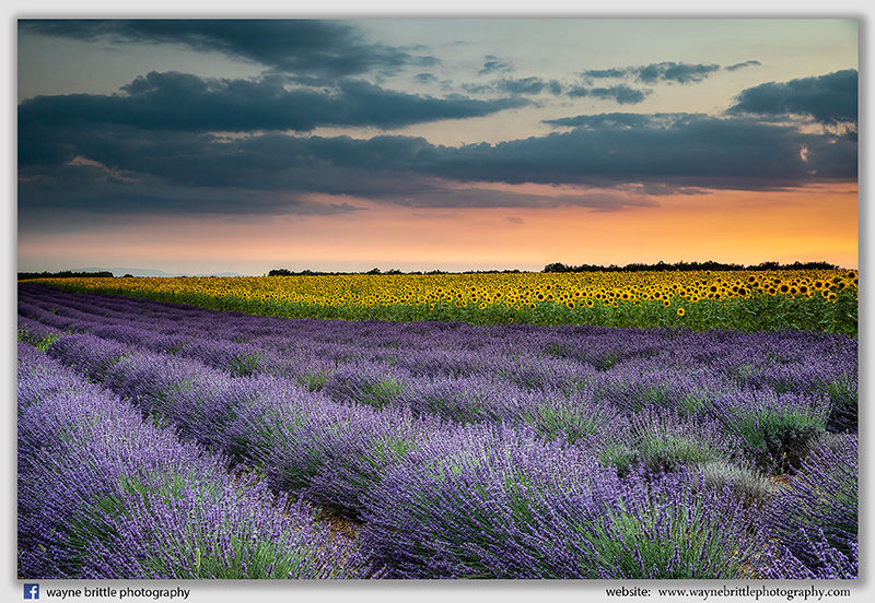 Lavender Field and Poppies at Sunsets-2 - W5D43616
