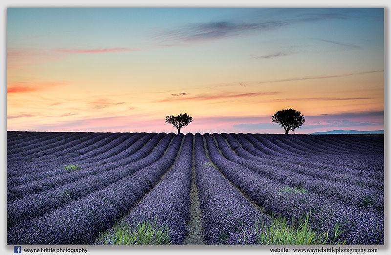 Lavender Field Sunset- v2- W5D44093