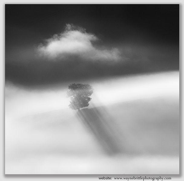 Lone Tree in the mist - B&W - W5D44622