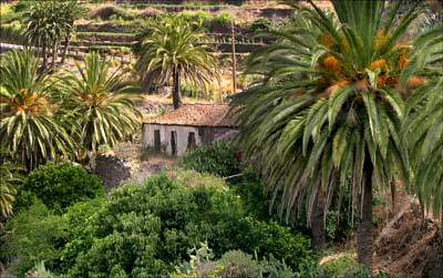 Masca in the Canary Islands