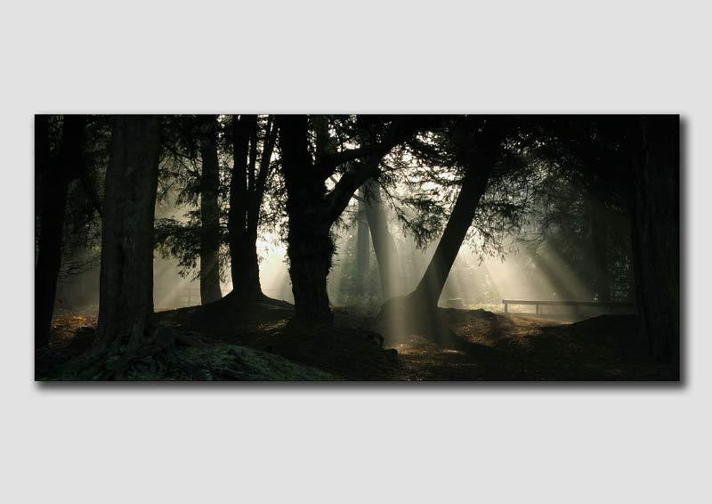 Misty Morning Light v2 - DP013