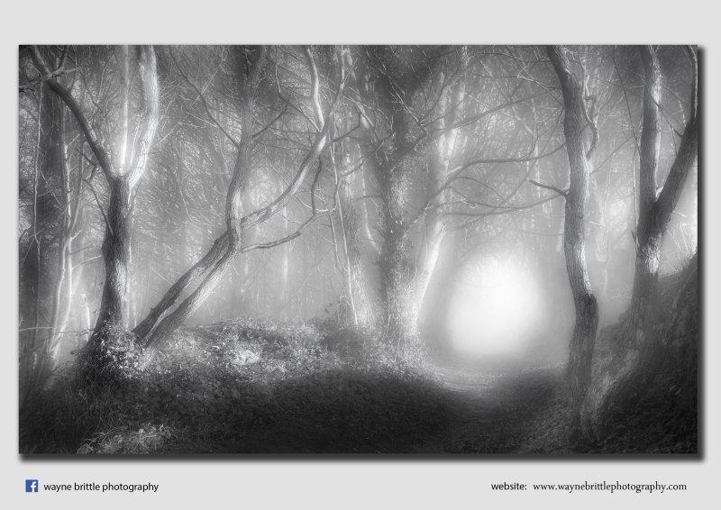 Misty-cal Woods - Peak District - FX8A8038