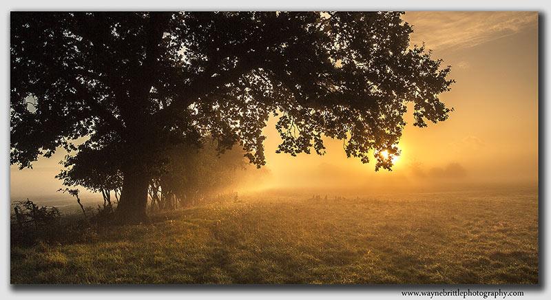 Morning Light - Derbyshire