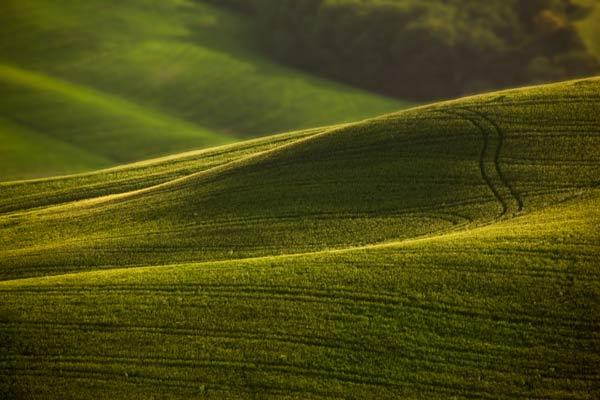 Tuscany Hills-TU0947