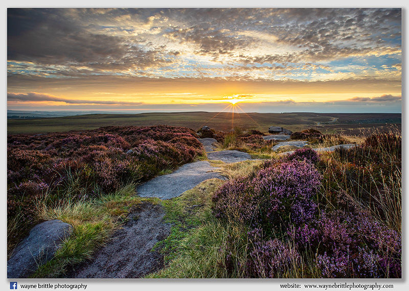 Path through the Heather to Sunrise - Stanage Edge - W5D44210