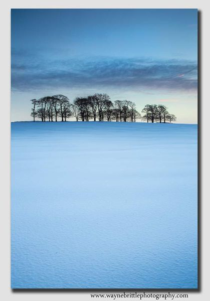 Winter Copse in the snow - 37964