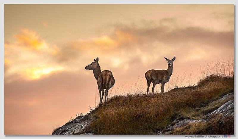 Red Deer Sunset--5DSR5169