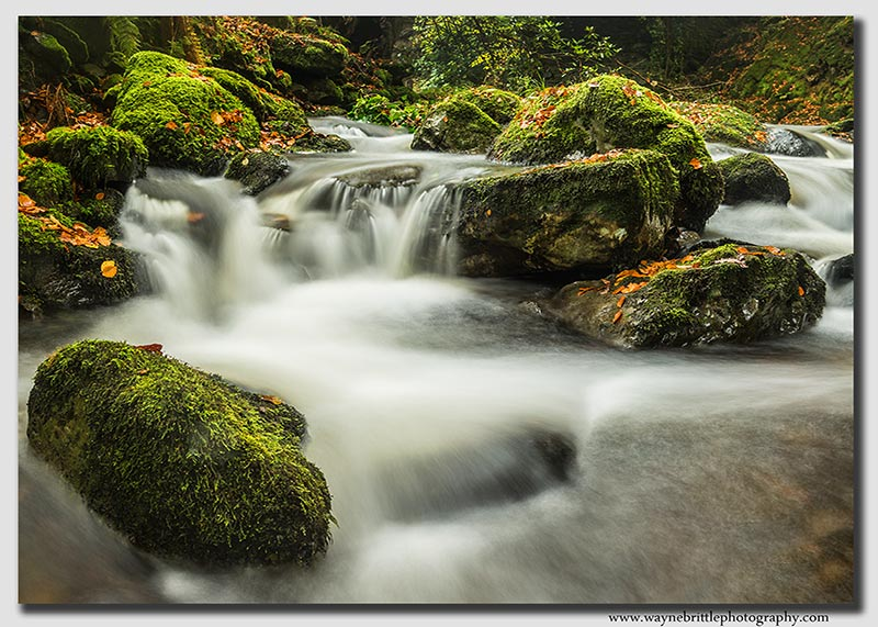 Rydal-Beck---Autumn-Pan
