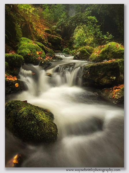Rydal-Beck-Falls-in-Autumn---W5D35155