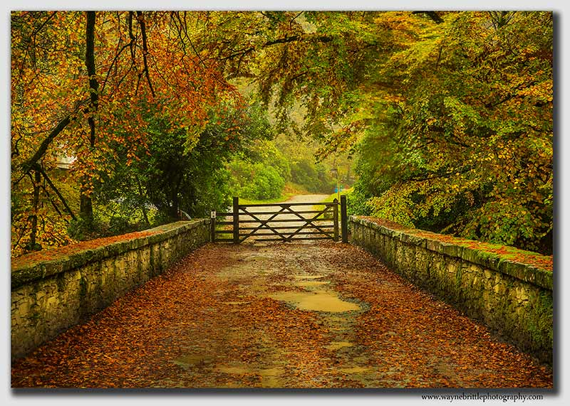 Rydal-House-Bridge-in-Autumn---W5D35139