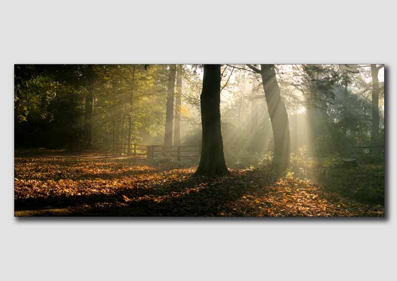 Shafts of Light, Elvaston Castle  -  DP014