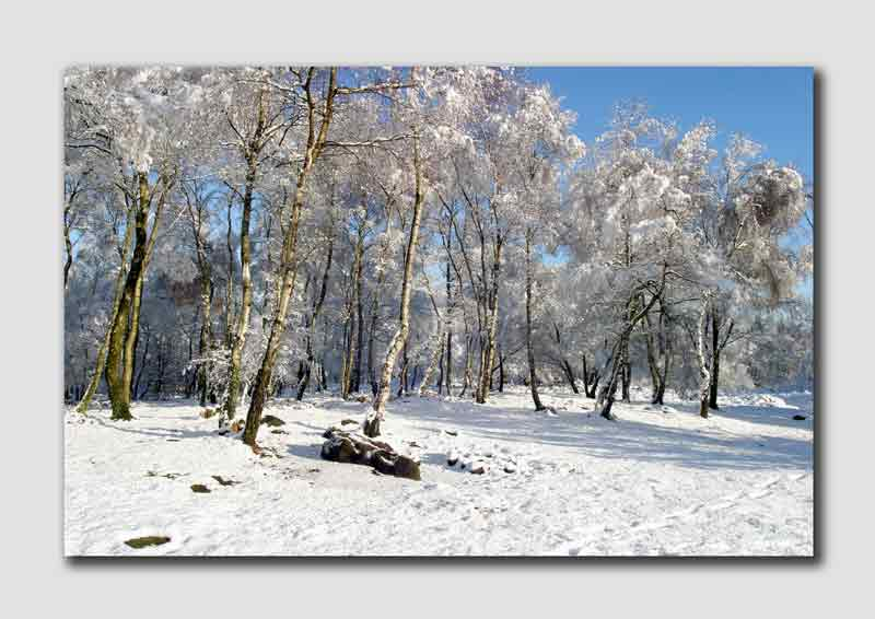 Winter Trees on Stanton Moor  -  PS032