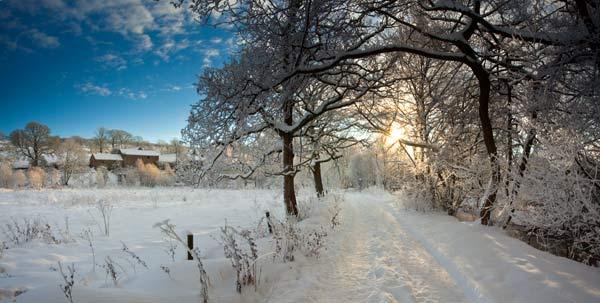 Winter Snowscene near Holmhead - Northumberland NP809P